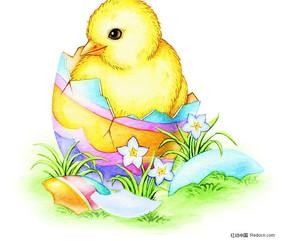 黄色小鸡插画 PSD