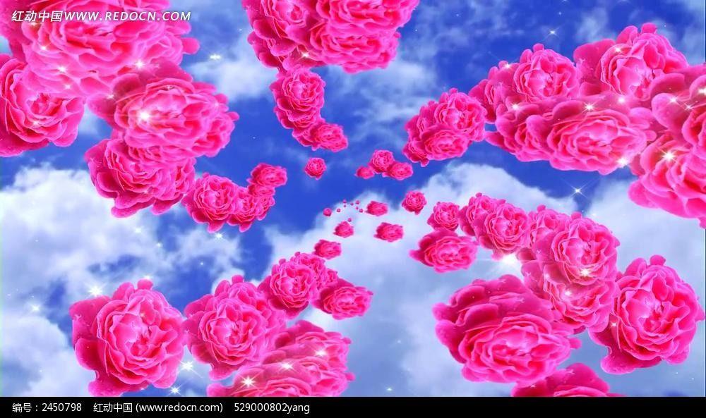 花开富贵牡丹花视频