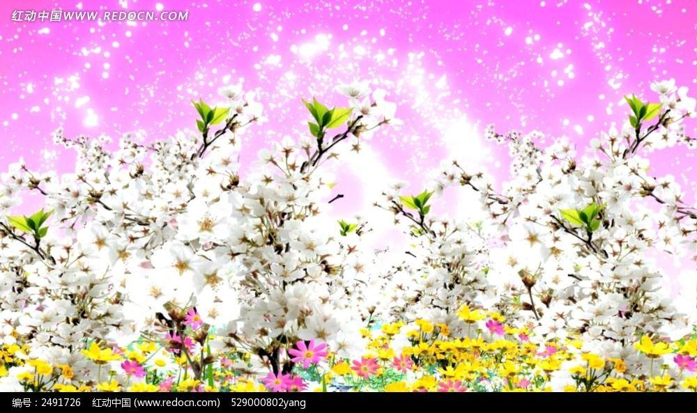 白色小花花视频素材