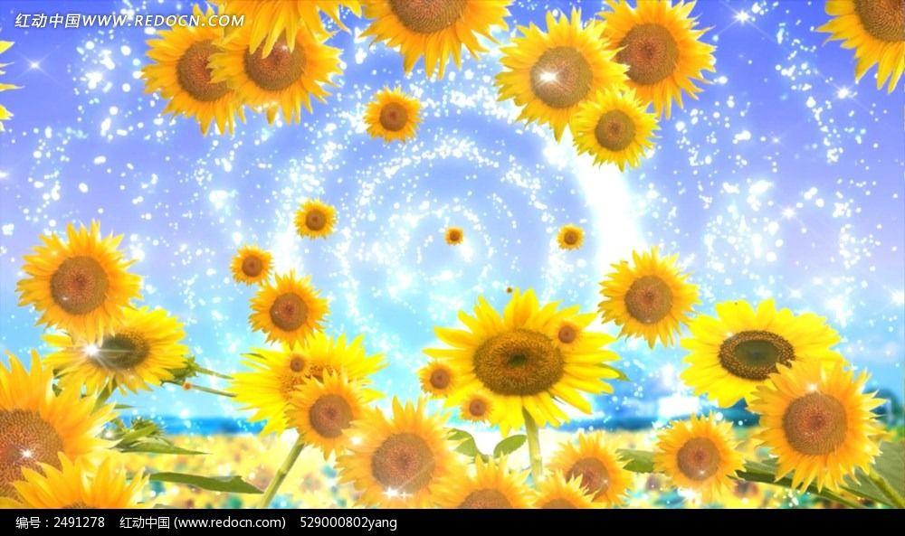 设计稿 视频素材/片头片尾/ae模板 动态|特效|背景视频 向日葵的微笑