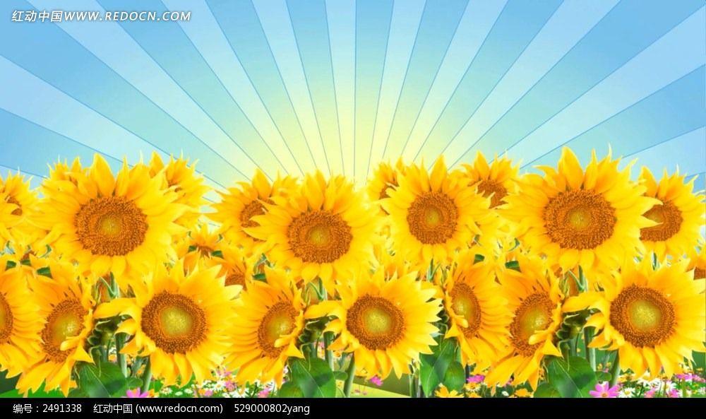 标签:向日葵 阳光向日葵 粒子特效合成 梦幻 风景类 舞台背景