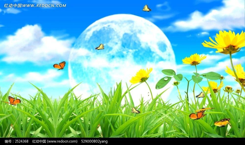 花丛中蝴蝶飞舞视频