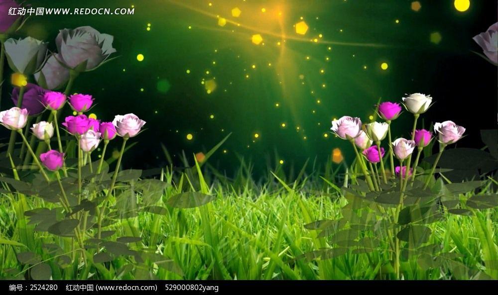 春天花景色的图片