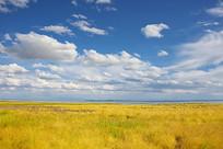 金黄色的达里湖草原美景