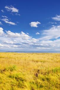 金色的草原美景