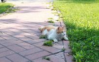 专注食物的潜伏猫