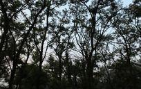 树林的影子