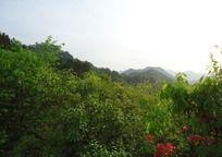 皖南屏山风景