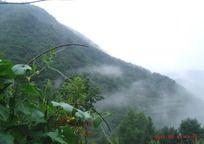 半山云雾袅绕风景
