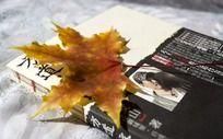 书籍上放着一片枫叶