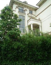 葱郁树丛上的洋房别墅