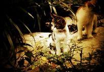 公园里的两只小猫咪摄影图片