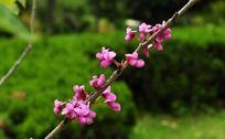 树枝上的满条红小花