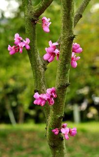 树枝上开花的植物