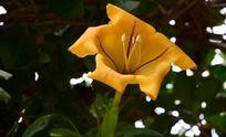 黄色盛开的花朵