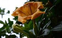 黄色花中清析的花蕊