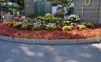 五颜六色的鲜花花坛