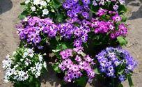 五颜六色的野菊花盆栽