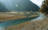 青山绿水间生长茂密的芦苇丛
