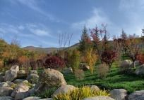 秋天的山坡