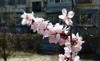 粉色桃色高清图片