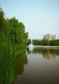 城市湖畔树影