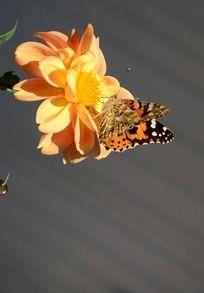 黄色的鲜花和蝴蝶