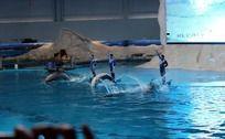 海豚跳水瞬间