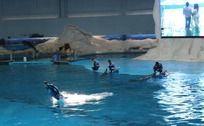 站在海豚背上游泳