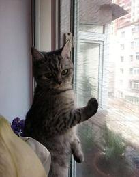 站在窗边的小猫