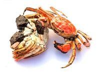 肥美大闸蟹