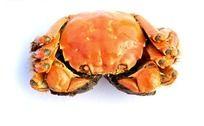 太湖蟹高清图片