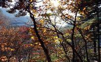 黄山树林秋色