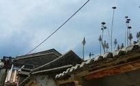 屋顶上的植物