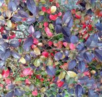 植物彩色底图