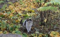 咬树枝的小猫