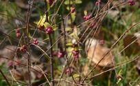 秋天植物上的小果实