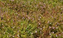 秋天紫色的小野花