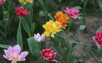 五颜六色的花儿
