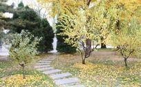 秋风瑟瑟的公园小路