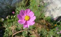 艳阳下的花