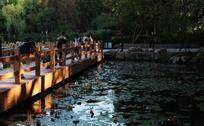 九山公园木桥上的摄影者