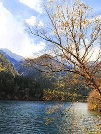 九寨沟秋季湖水边的金色枝头