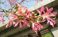 开满枝头的粉红花朵