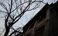 老房子树枝剪影