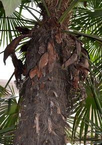 棕树 大厦 路灯图片图片