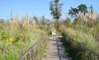 草堆中的一条路