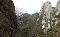 枯树前的陡峭山峰