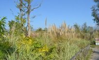杂乱的绿草