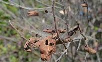 掉在蜘蛛网上的落叶